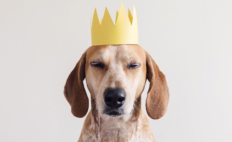 En Çok Aranan Köpekler